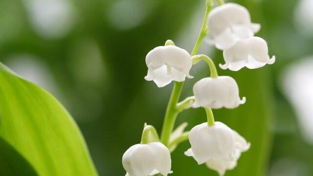 危険な毒性のある花6選! / そのお花だいじょうぶ?